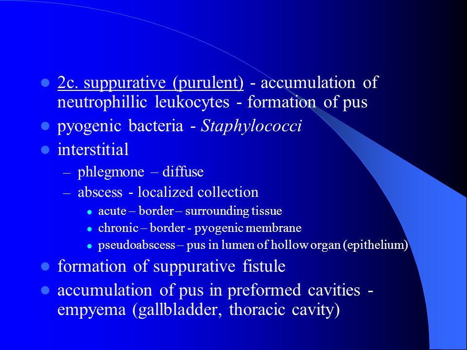 2c. suppurative (purulent) - accumulation of neutrophillic leukocytes - formation of pus pyogenic bacteria - Staphylococci interstitial – phlegmone –