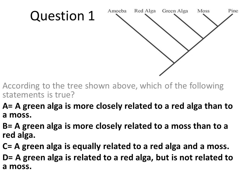 According to the tree shown above, which of the following statements is true? A= A green alga is more closely related to a red alga than to a moss. B=