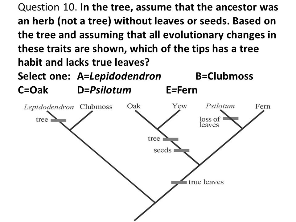 Question 10. In the tree, assume that the ancestor was an herb (not a tree) without leaves or seeds. Based on the tree and assuming that all evolution