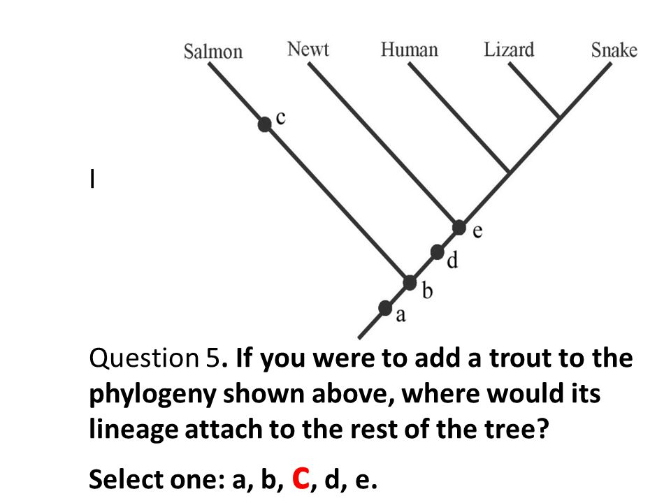 I Question 5. If you were to add a trout to the phylogeny shown above, where would its lineage attach to the rest of the tree? Select one: a, b, c, d,