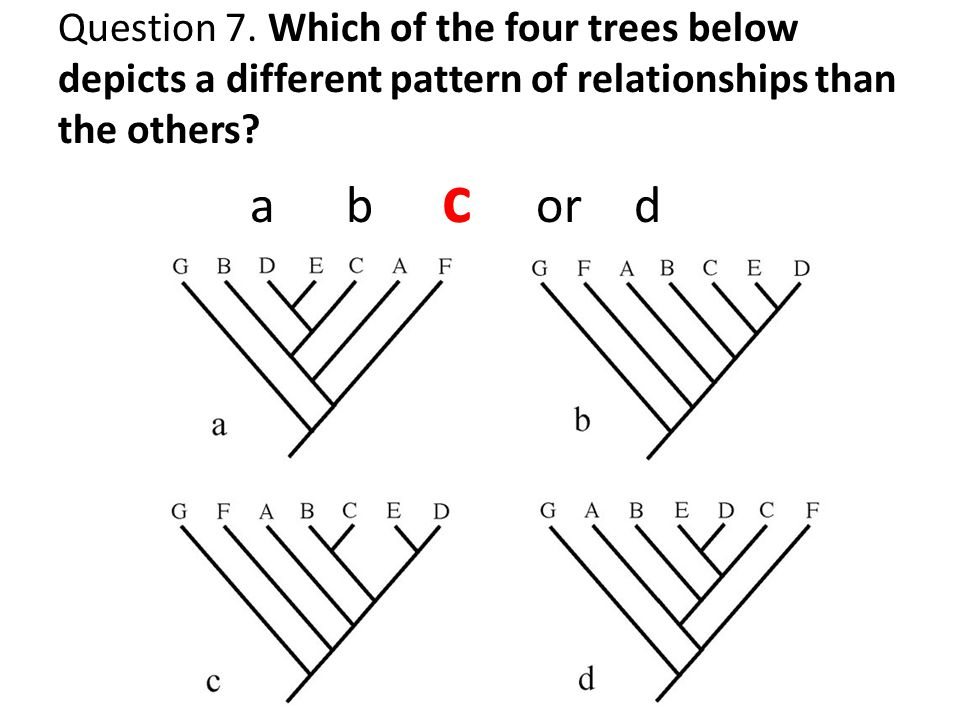 Question 7. Which of the four trees below depicts a different pattern of relationships than the others? ab c or d