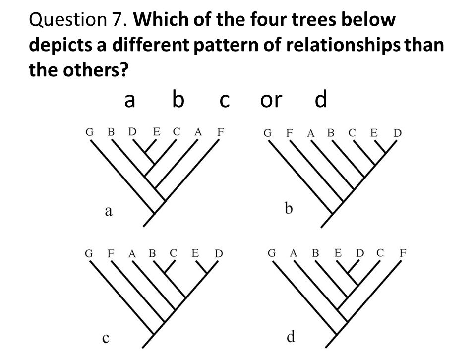 Question 6. Which of the trees below is false given the larger phylogeny above? d