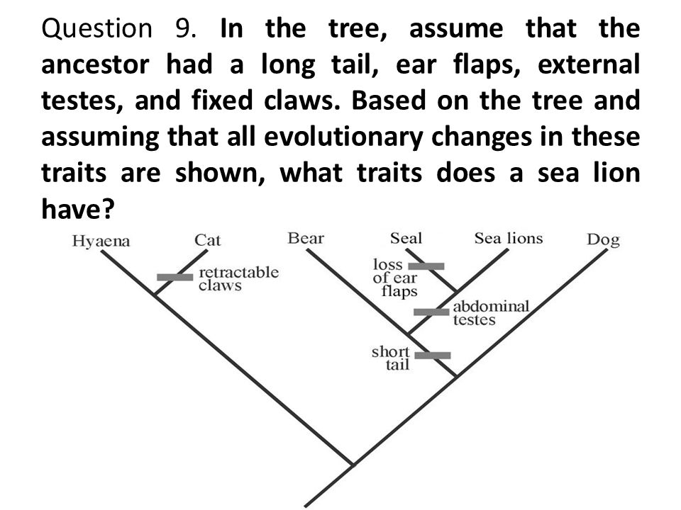 Question 9. In the tree, assume that the ancestor had a long tail, ear flaps, external testes, and fixed claws. Based on the tree and assuming that al