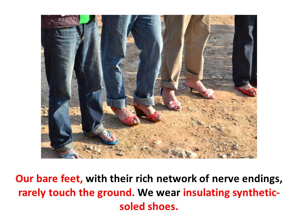 Our bare feet, with their rich network of nerve endings, rarely touch the ground. We wear insulating synthetic- soled shoes.