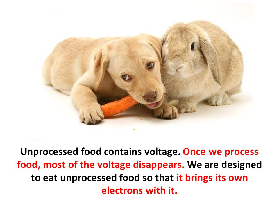 Unprocessed food contains voltage. Once we process food, most of the voltage disappears. We are designed to eat unprocessed food so that it brings its