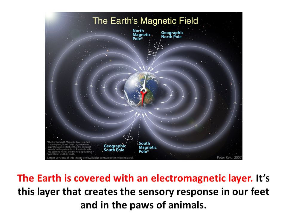 The Earth is covered with an electromagnetic layer. It's this layer that creates the sensory response in our feet and in the paws of animals.