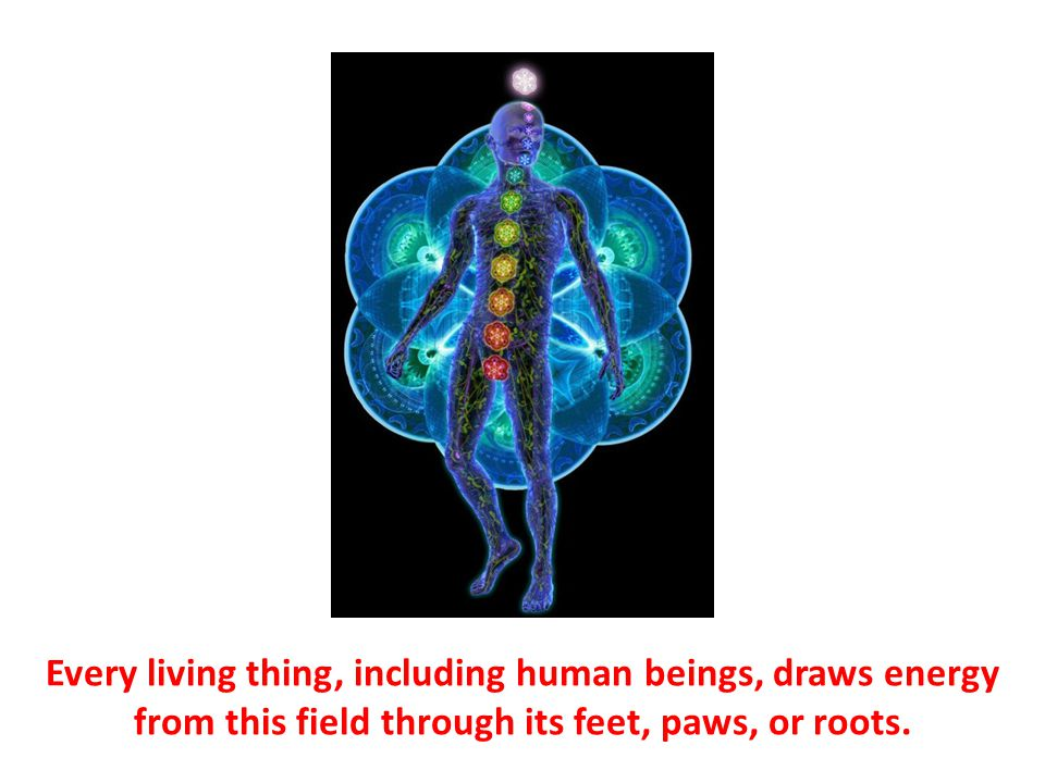 Every living thing, including human beings, draws energy from this field through its feet, paws, or roots.