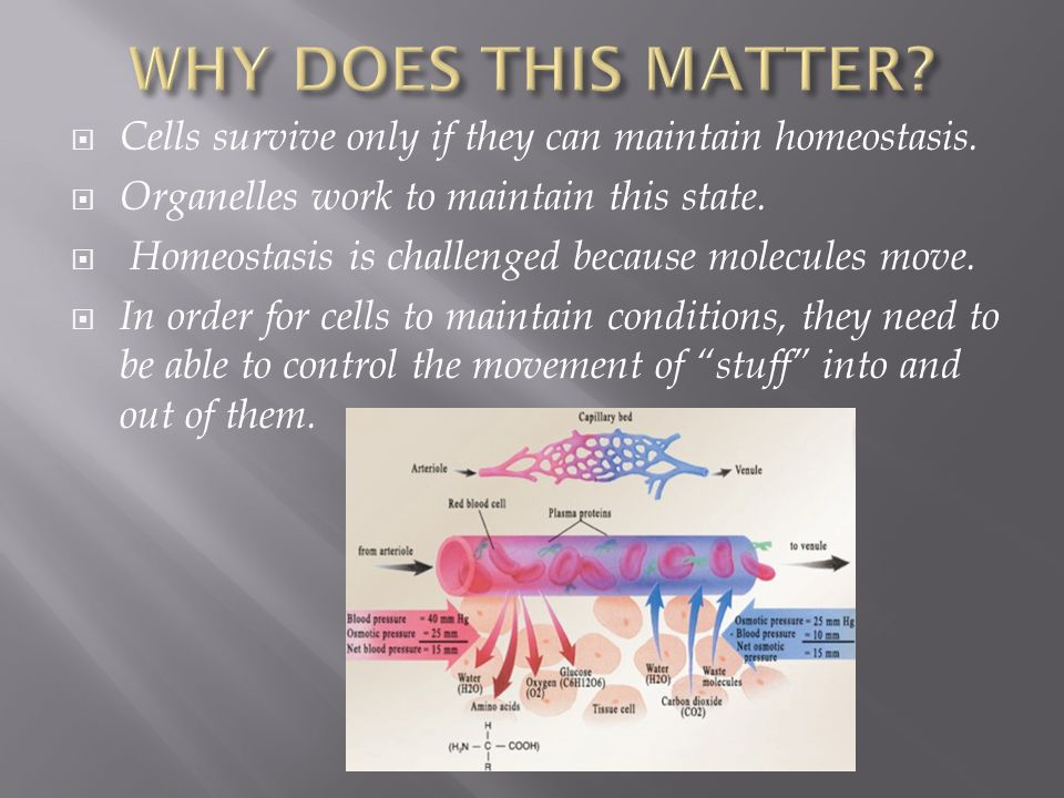  Cells survive only if they can maintain homeostasis.  Organelles work to maintain this state.  Homeostasis is challenged because molecules move. 