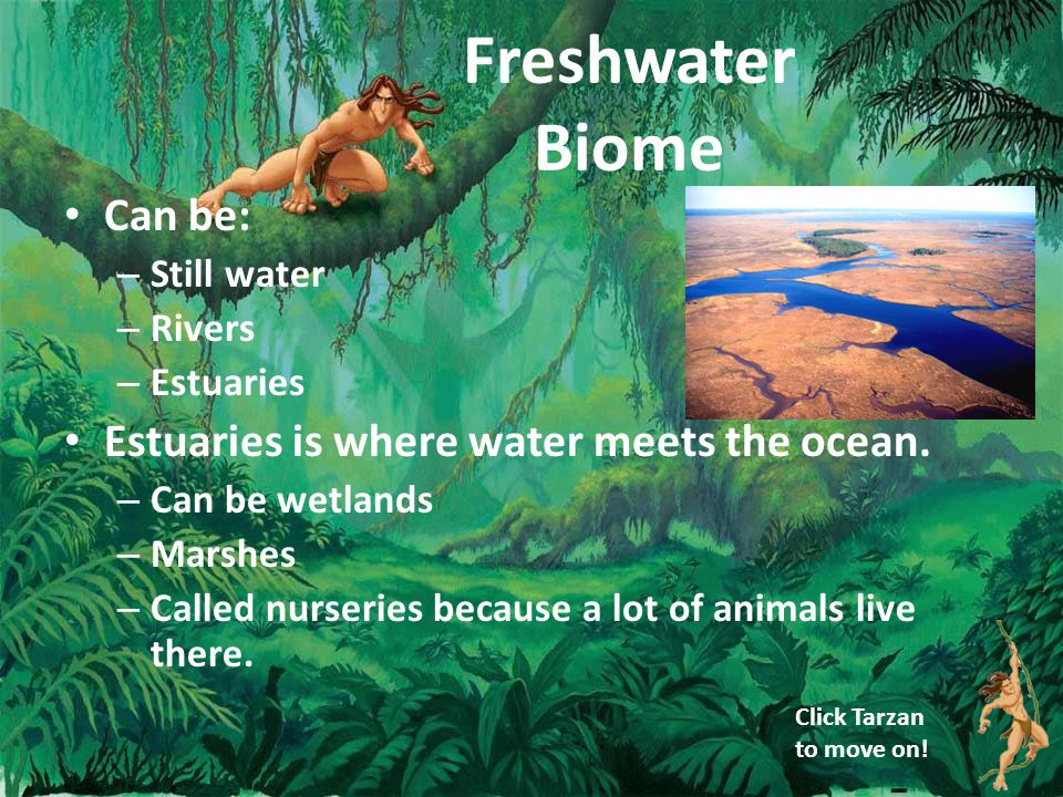 Freshwater Biome Can be: – Still water – Rivers – Estuaries Estuaries is where water meets the ocean.