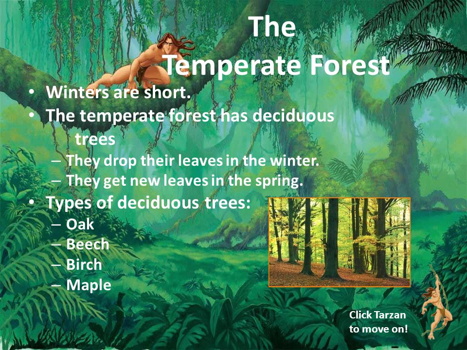 The Temperate Forest Winters are short.