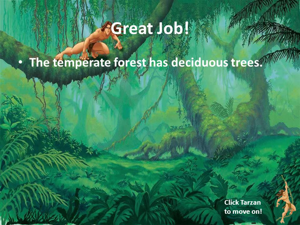 Great Job! The temperate forest has deciduous trees. Click Tarzan to move on!