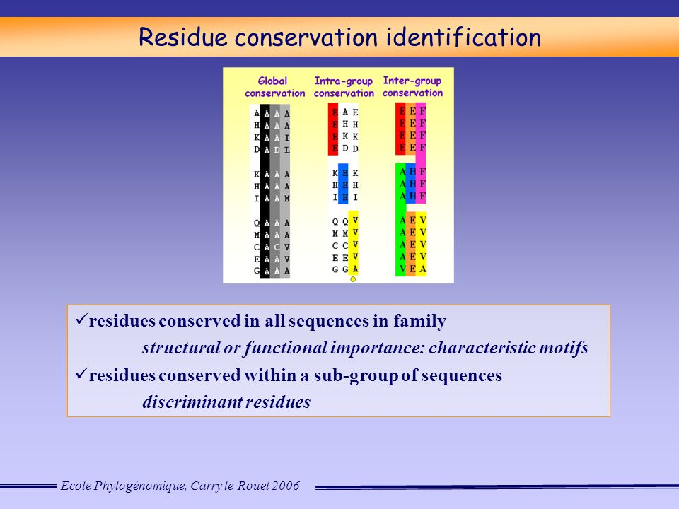 Ecole Phylogénomique, Carry le Rouet 2006 Residue conservation identification residues conserved in all sequences in family structural or functional importance: characteristic motifs residues conserved within a sub-group of sequences discriminant residues