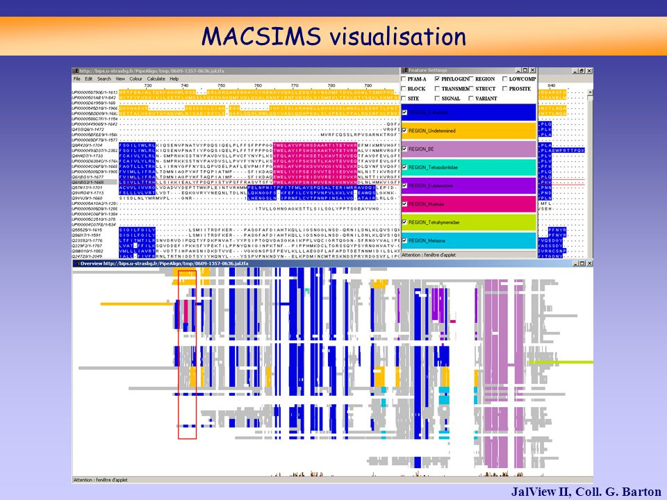 MACSIMS visualisation JalView II, Coll. G. Barton