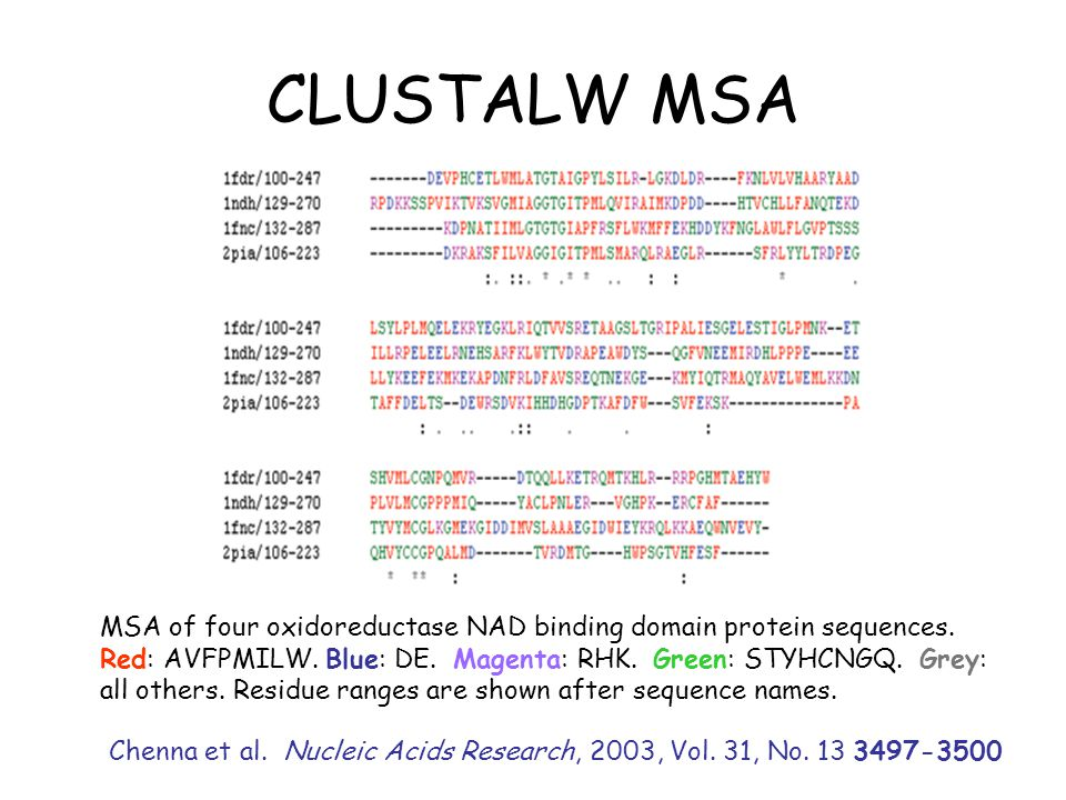 CLUSTALW MSA MSA of four oxidoreductase NAD binding domain protein sequences.