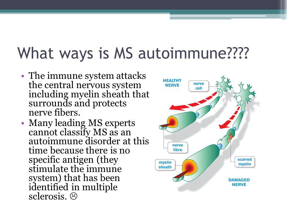 What ways is MS autoimmune .