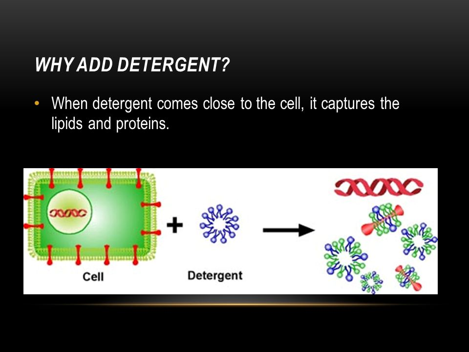 WHY ADD DETERGENT? When detergent comes close to the cell, it captures the lipids and proteins.