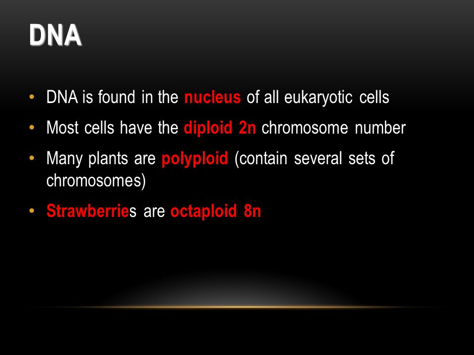 DNA DNA is found in the nucleus of all eukaryotic cells Most cells have the diploid 2n chromosome number Many plants are polyploid (contain several sets of chromosomes) Strawberrie s are octaploid 8n