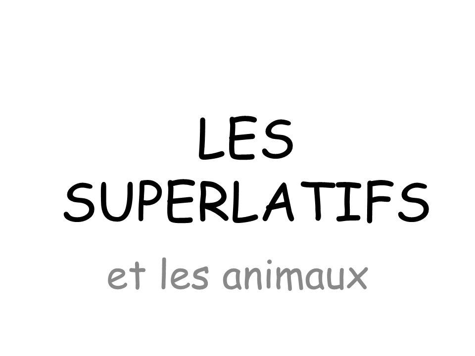 LES SUPERLATIFS et les animaux