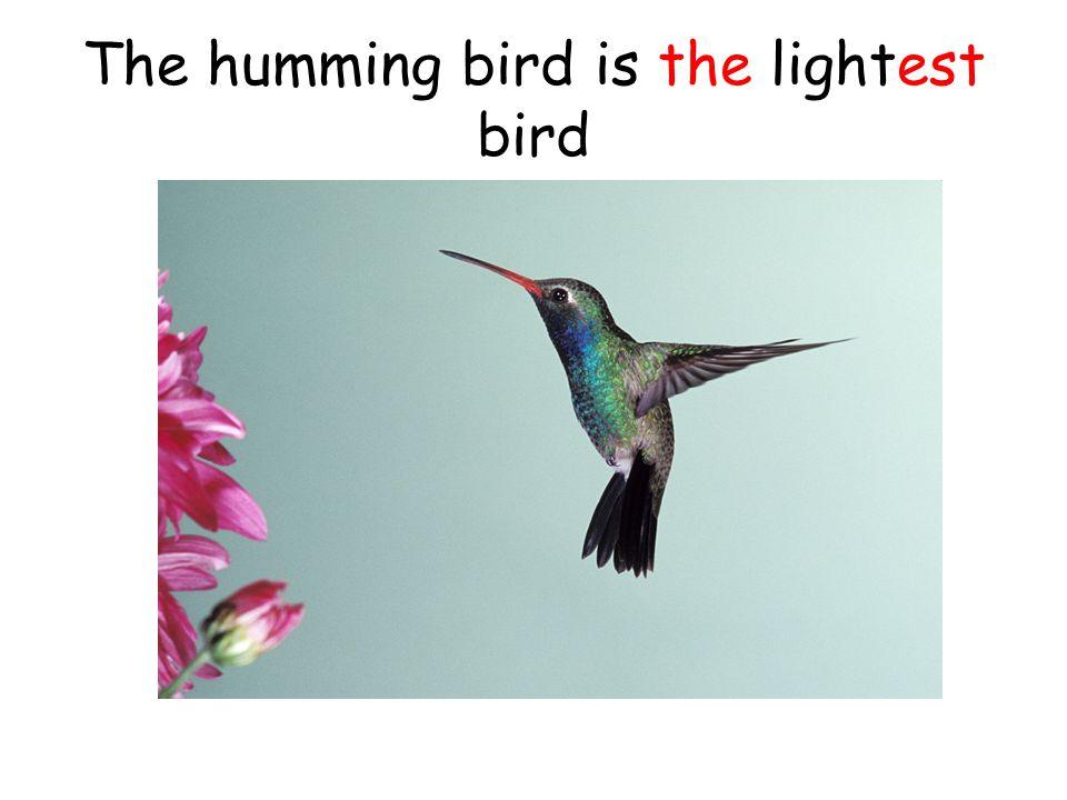 The humming bird is the lightest bird