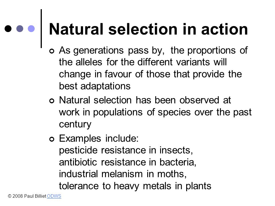 Natural selection in action As generations pass by, the proportions of the alleles for the different variants will change in favour of those that provide the best adaptations Natural selection has been observed at work in populations of species over the past century Examples include: pesticide resistance in insects, antibiotic resistance in bacteria, industrial melanism in moths, tolerance to heavy metals in plants © 2008 Paul Billiet ODWSODWS