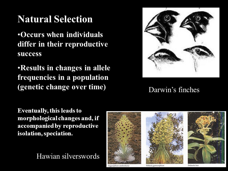 RAPID SELECTION (Intense selection, rapid evolution) Natural Selection II
