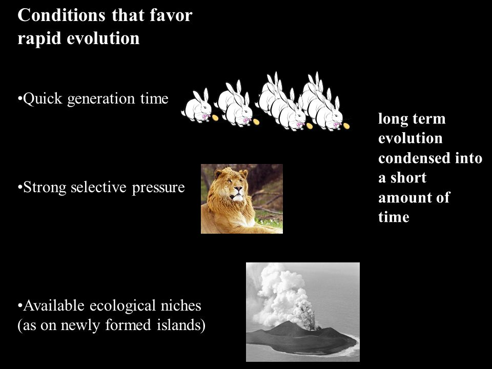 Conditions that favor rapid evolution Quick generation time Strong selective pressure Available ecological niches (as on newly formed islands) long term evolution condensed into a short amount of time