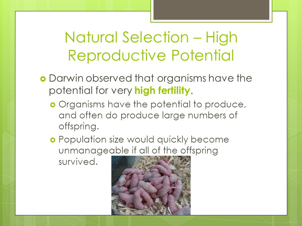 Natural Selection – High Reproductive Potential  Darwin observed that organisms have the potential for very high fertility.