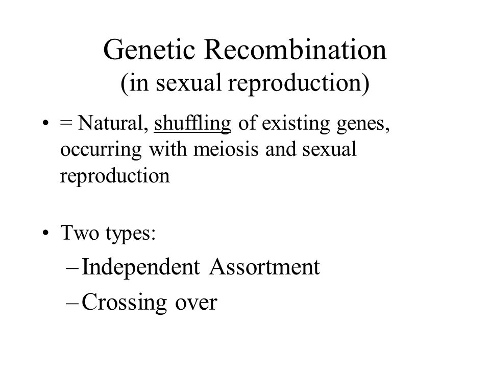 Genetic Recombination (in sexual reproduction) = Natural, shuffling of existing genes, occurring with meiosis and sexual reproduction Two types: –Inde
