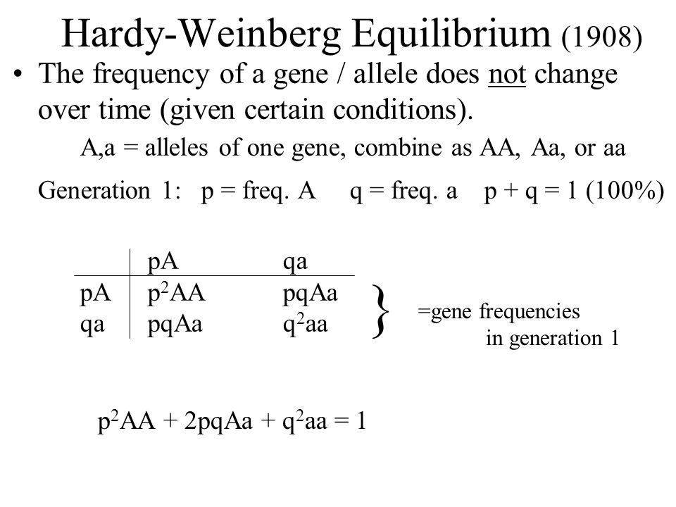 Hardy-Weinberg Equilibrium (1908) The frequency of a gene / allele does not change over time (given certain conditions). A,a = alleles of one gene, co