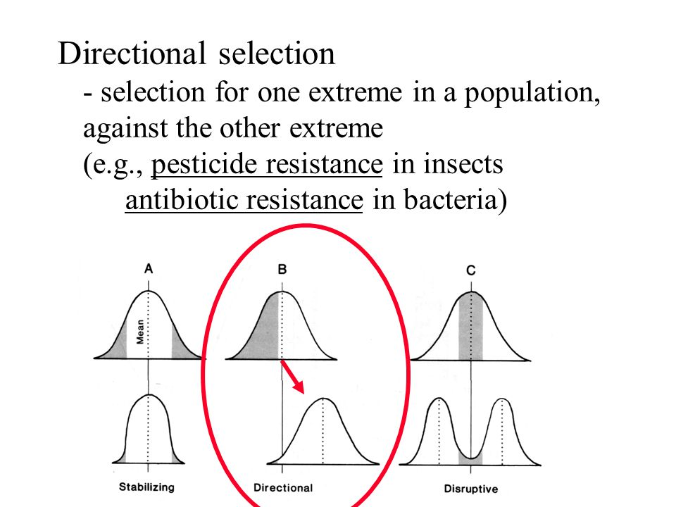 Directional selection - selection for one extreme in a population, against the other extreme (e.g., pesticide resistance in insects antibiotic resista