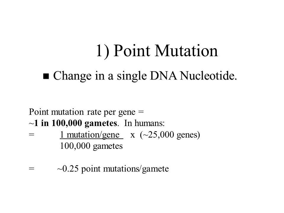 E.g., human hemoglobin: 2 alpha chains (141 amino acids) 2 beta chains (146 amino acids) 1973 sampling of population (thousands): 169 mutation types recorded: 62 substitutions in alpha 99 substitutions in beta 1 deletion in alpha 7 deletions in beta 1 in 2,000 people have mutant hemoglobin gene.