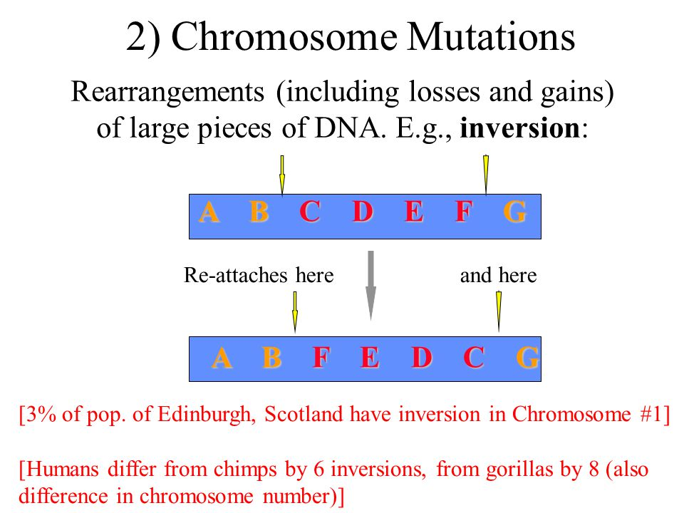 3) Change in Chromosome No.