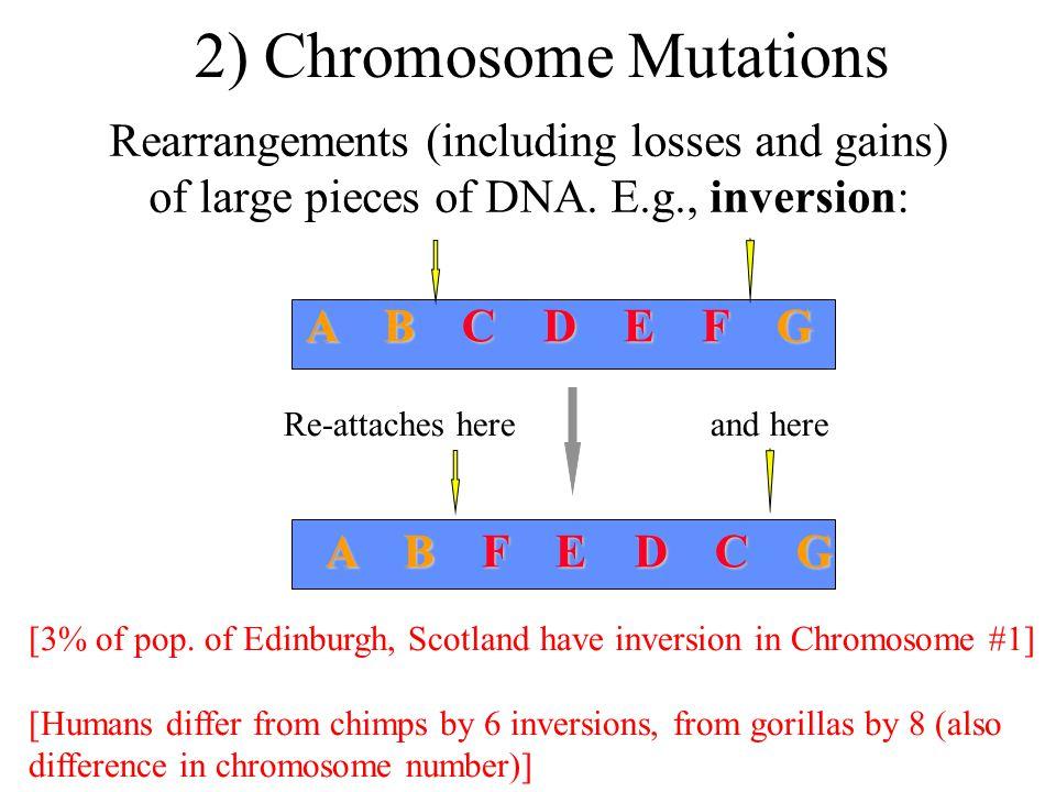 Fitness = allele/genotype freq.in future generation allele/genotype freq.
