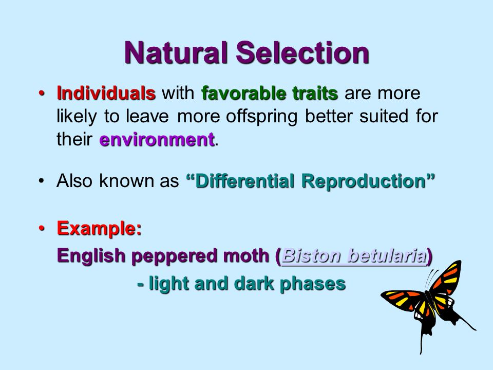 Natural Selection Individualsfavorabletraits environmentIndividuals with favorable traits are more likely to leave more offspring better suited for their environment.