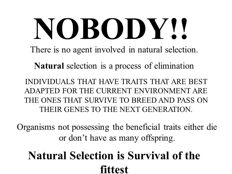 INDIVIDUALS THAT HAVE TRAITS THAT ARE BEST ADAPTED FOR THE CURRENT ENVIRONMENT ARE THE ONES THAT SURVIVE TO BREED AND PASS ON THEIR GENES TO THE NEXT