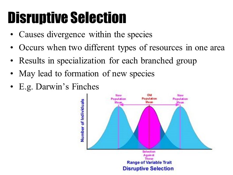 Disruptive Selection Causes divergence within the species Occurs when two different types of resources in one area Results in specialization for each