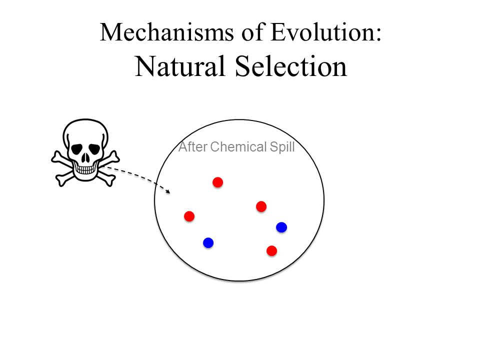 After Chemical Spill Mechanisms of Evolution: Natural Selection