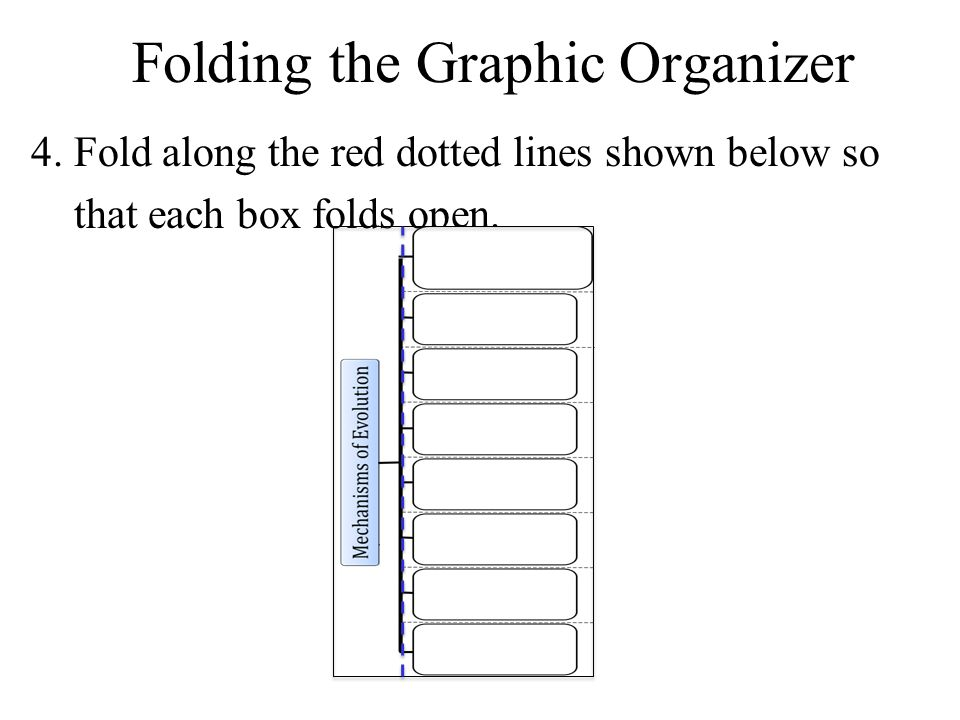 4. Fold along the red dotted lines shown below so that each box folds open. Folding the Graphic Organizer