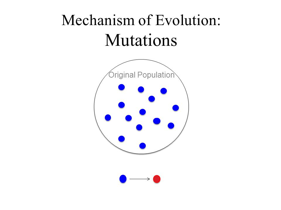 Mechanism of Evolution: Mutations Original Population