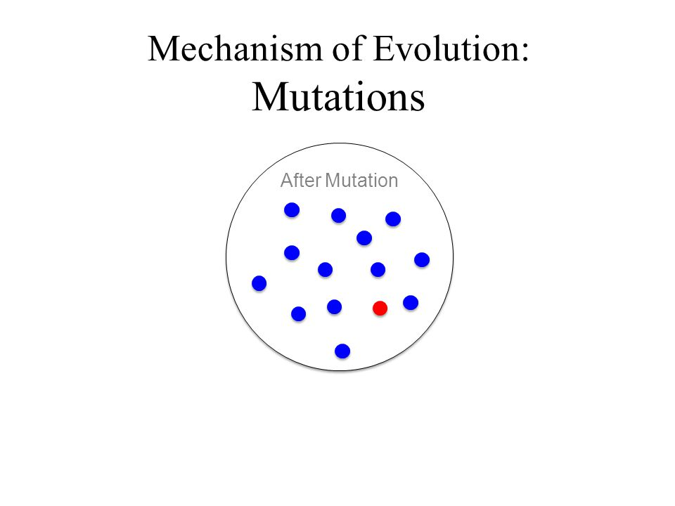 Mechanism of Evolution: Mutations After Mutation