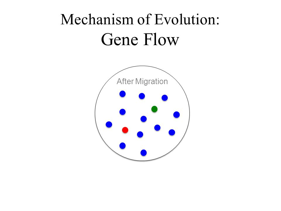 Mechanism of Evolution: Gene Flow After Migration