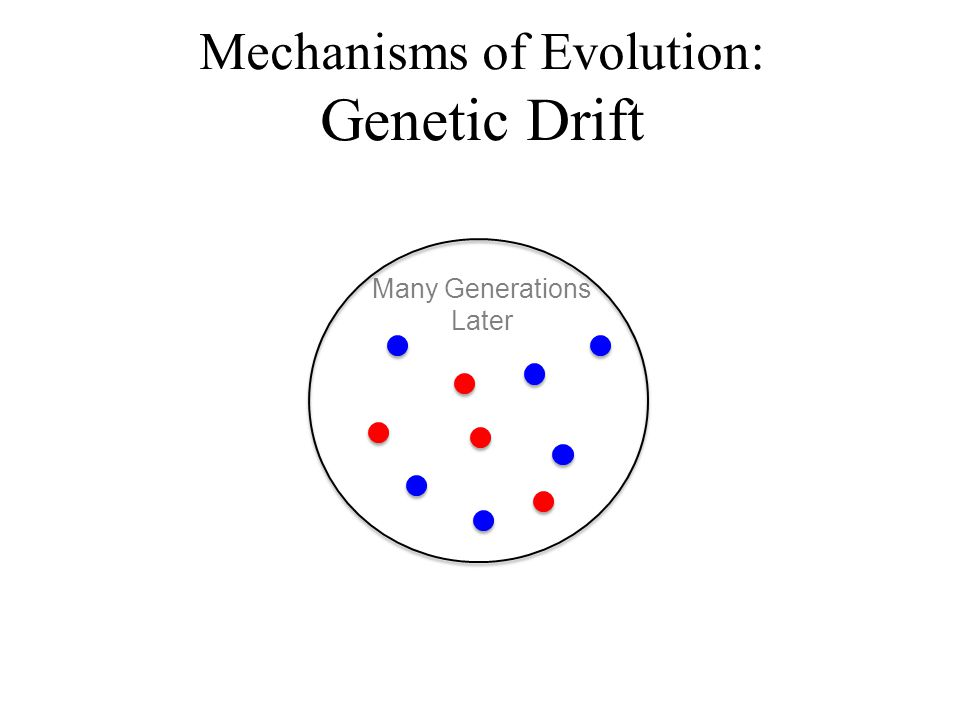 Many Generations Later Mechanisms of Evolution: Genetic Drift