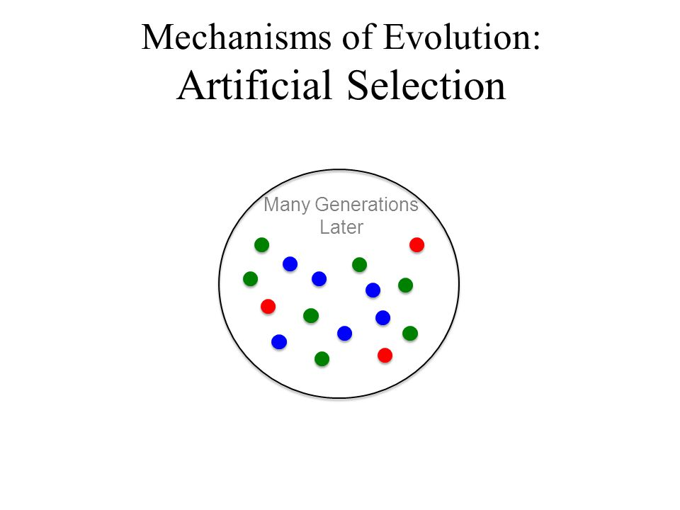 Many Generations Later Mechanisms of Evolution: Artificial Selection