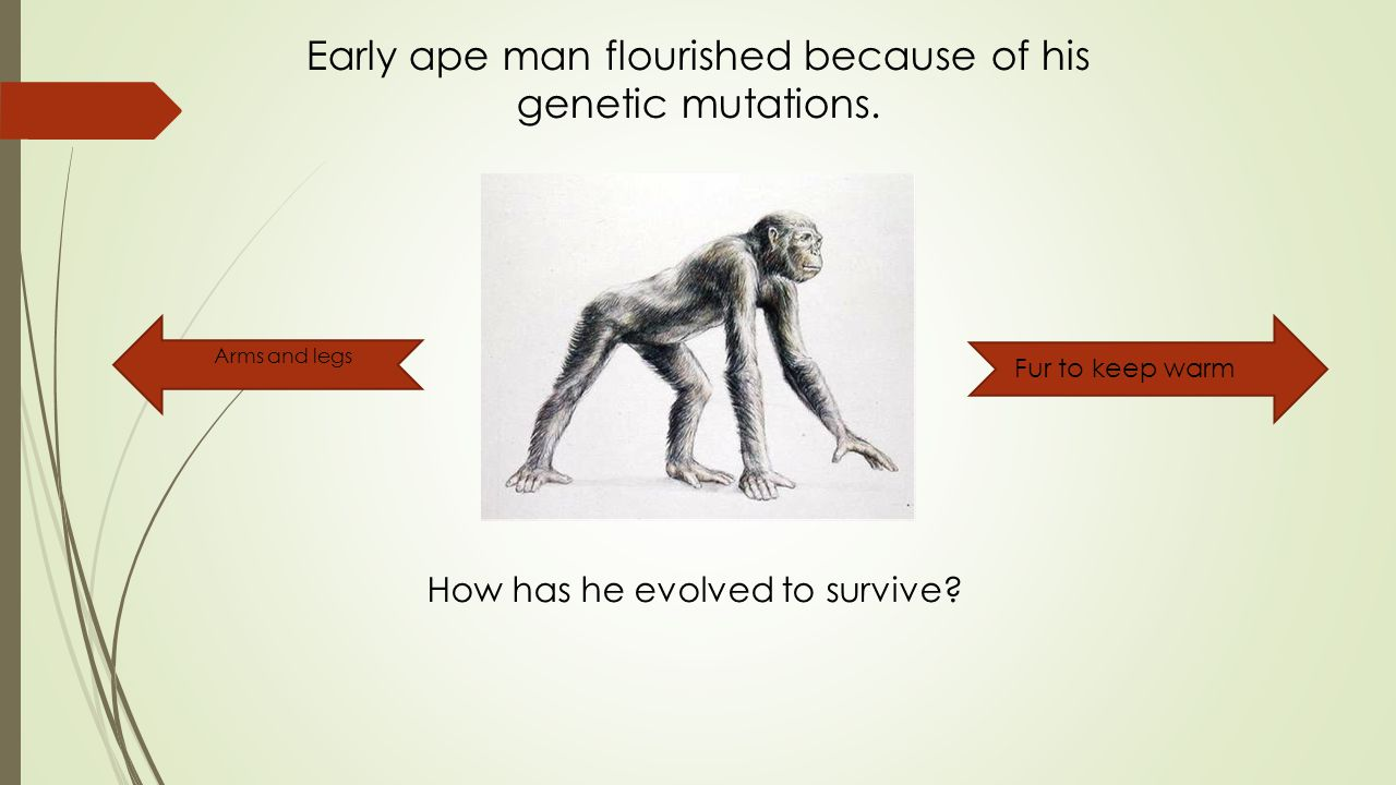 Early ape man flourished because of his genetic mutations.