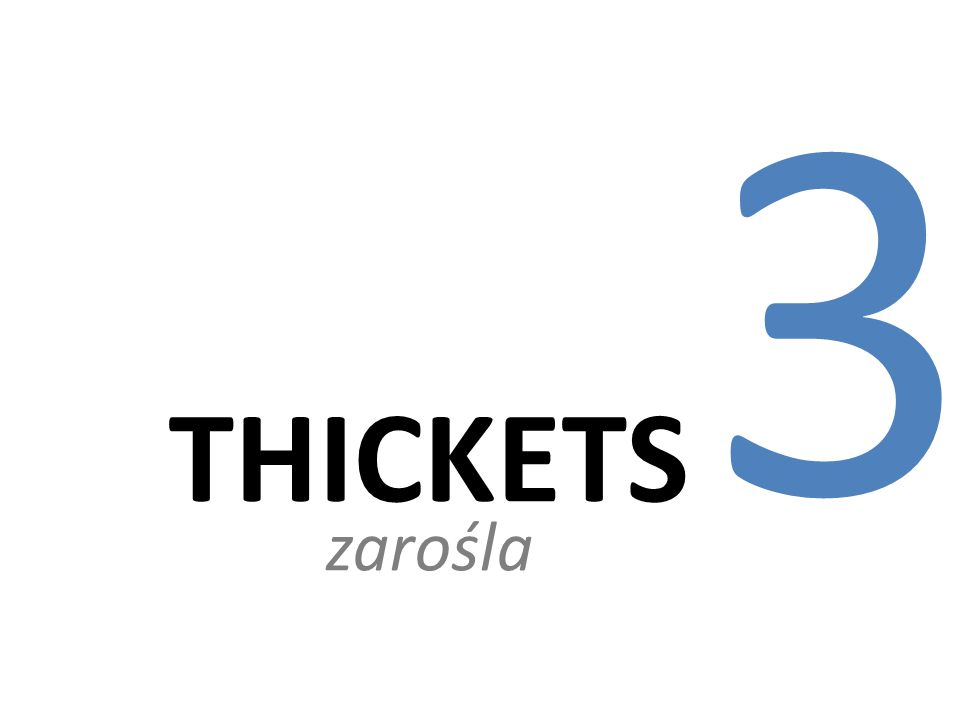 3 THICKETS zarośla