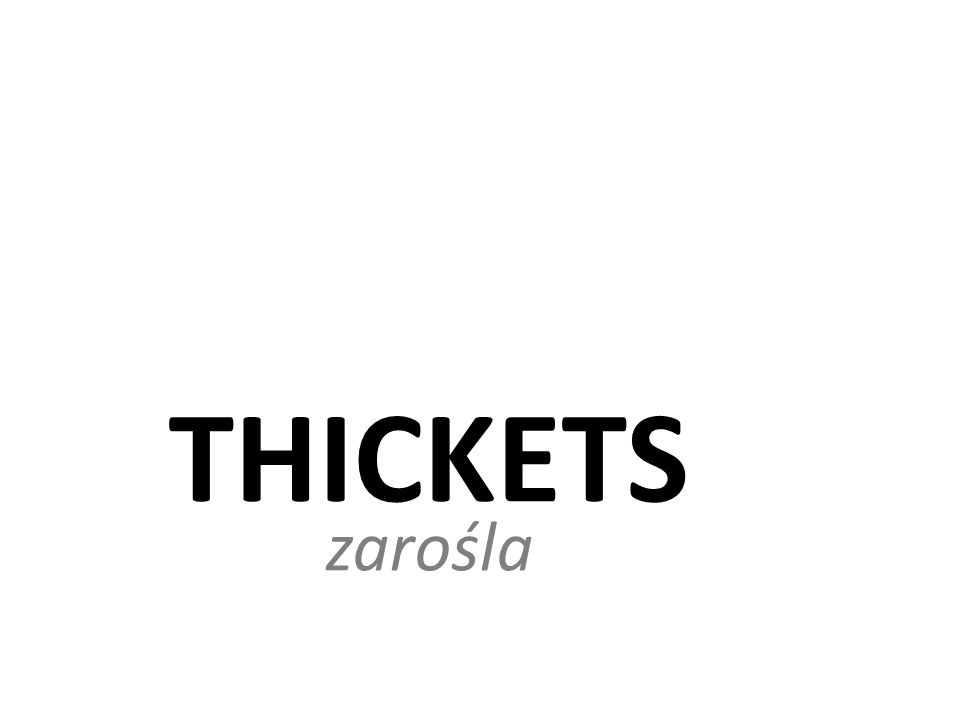 THICKETS zarośla