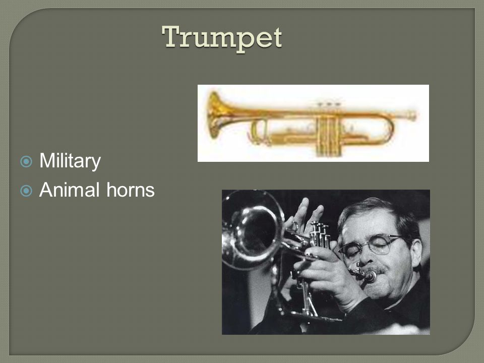Trumpet  Military  Animal horns