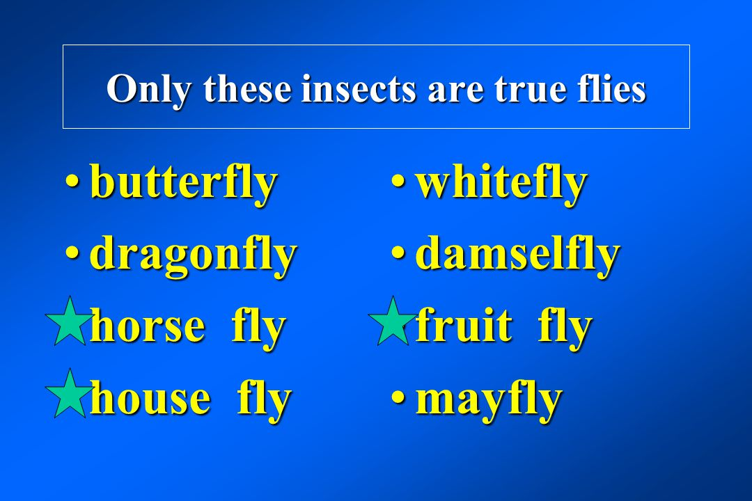 Only these insects are true flies butterflybutterfly dragonflydragonfly horse flyhorse fly house flyhouse fly whiteflywhitefly damselflydamselfly frui