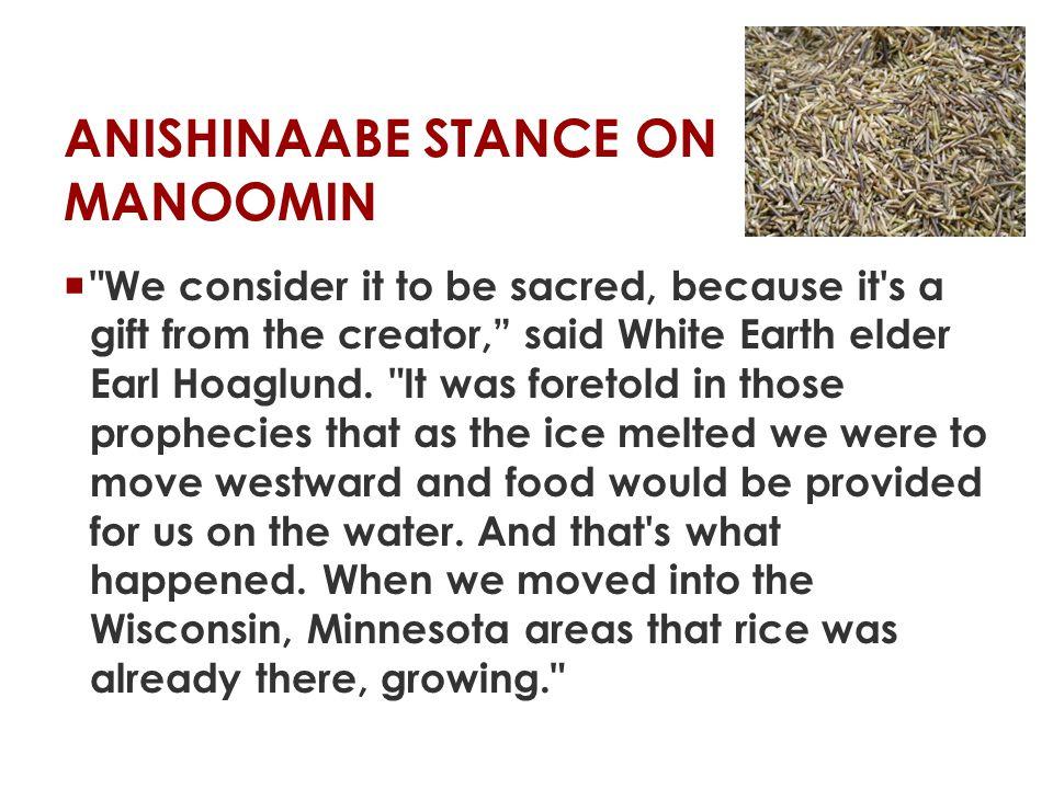 ANISHINAABE STANCE ON MANOOMIN  The value of manoomin is difficult to express:  Cultural and spiritual significance  Economic value  Legal