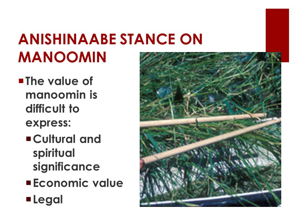 ANISHINAABE STANCE ON MANOOMIN  The value of manoomin is difficult to express:  Cultural and spiritual significance  Economic value  Legal